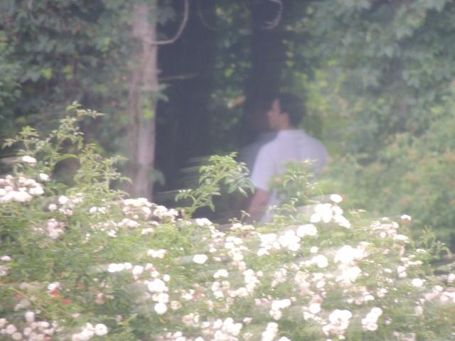 man standing under tree-best suicide method
